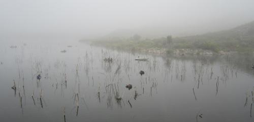 Lake_hodges_in_fog